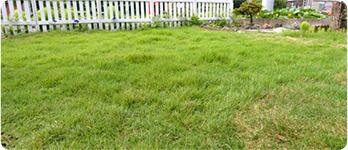 芝生を敷きたい